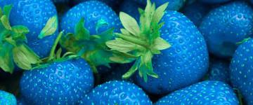 Можно ли вырастить голубую клубнику