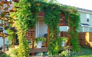 Что такое вертикальный сад, и как его обустроить на даче