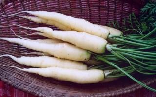 Белая морковь – сюрприз в вашем меню