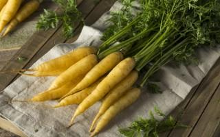 Особенности сортов и правила выращивания желтой моркови